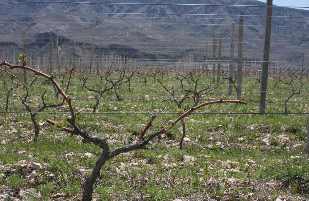 armenian wine trinity canyon vineyards